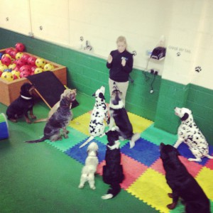 dog care in keighley